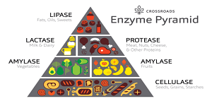 Enzyme Nutrition Therapy